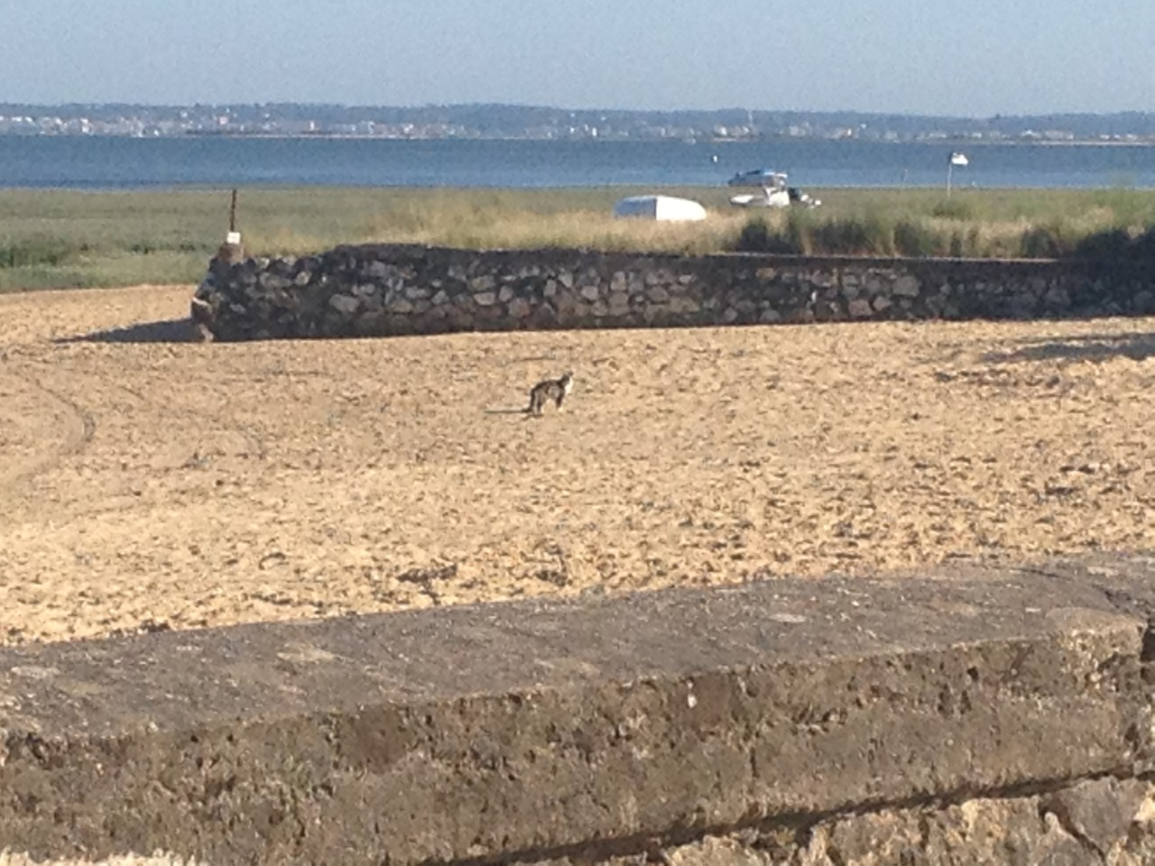 to begin, here is a cat on the beach